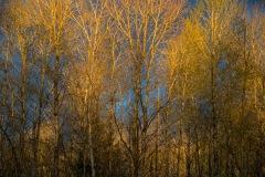 Lattanzi-SunsetTrees-0049